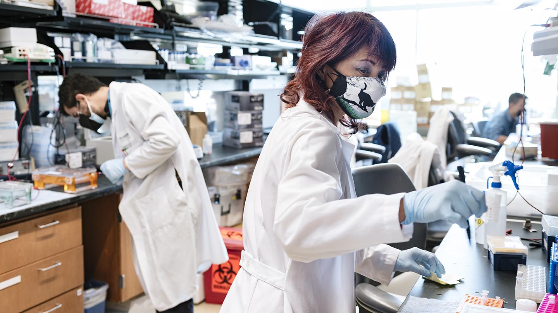 Scientists in Melanie Ott's lab at Gladstone Institutes